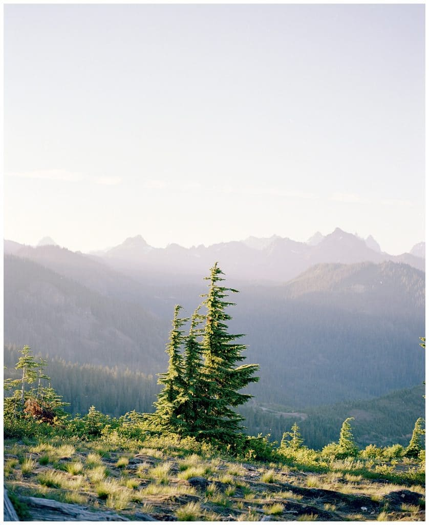 Evergreen tree at sunset in the mountains